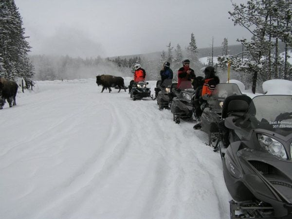 NO GUIDE REQUIRED – YELLOWSTONE PARK ACCESS LOTTERY OPENS AUGUST 1